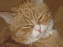 Cat by greedymax