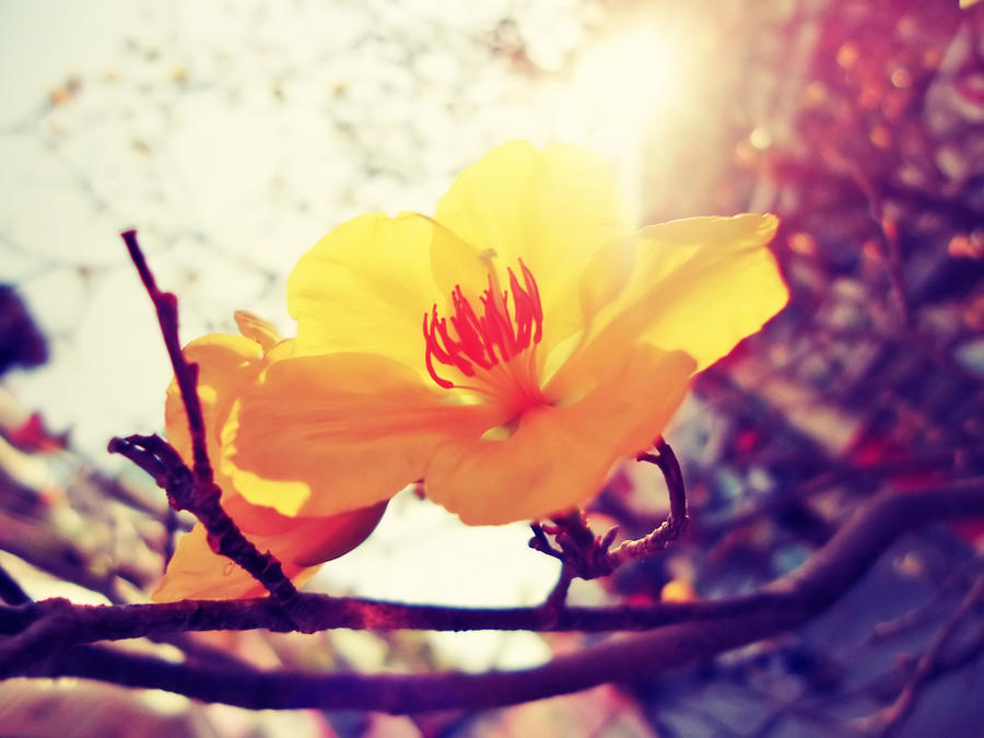 Spring by WillTC