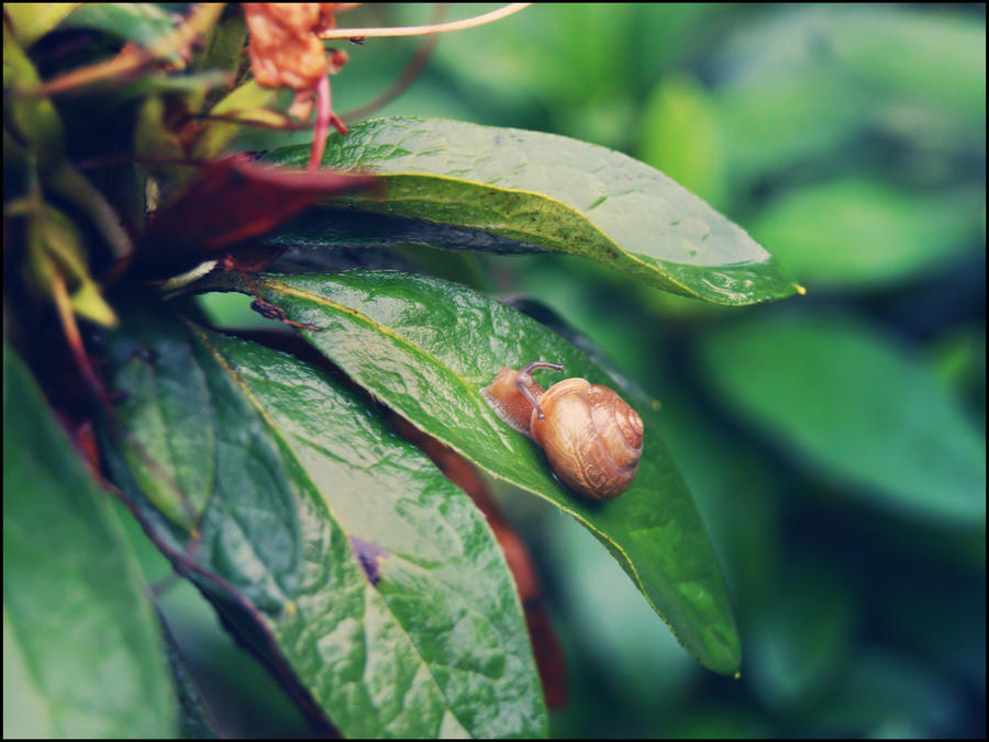 Little Snail by WillTC