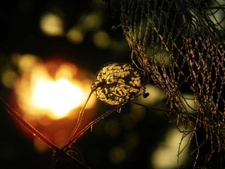 Glow Light by WillTC
