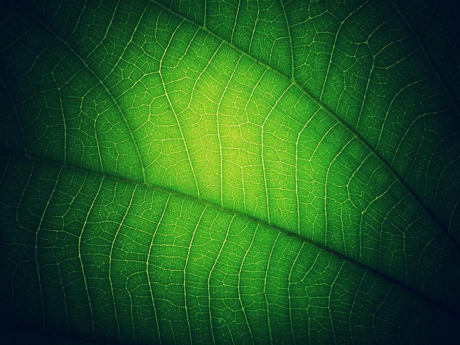 Green Veins by WillTC