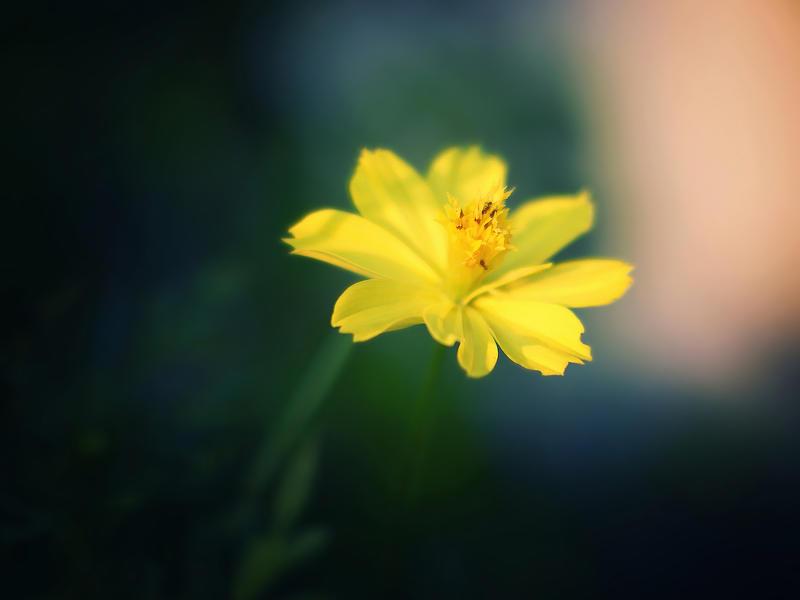 Yellow Breeze by WillTC