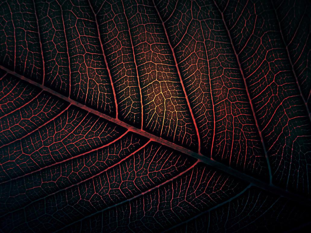 Lava Leaf by WillTC