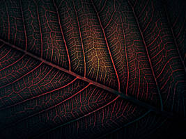 Lava Leaf