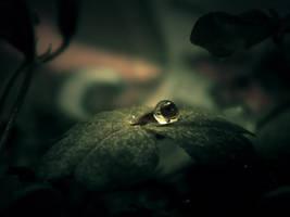 Solitude by WillTC