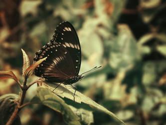 Beauty in Black by WillTC