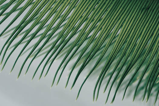Cycad Touch