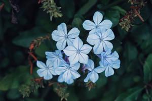 Magical Blue