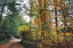 Our Autumn