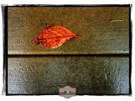 Damp Autumn Morning
