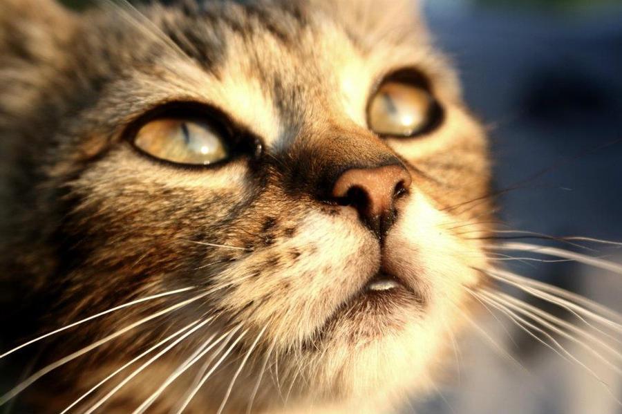 meow by Adouckaa