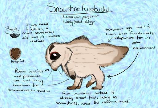 Wallace II - Snowshoe Fuzzbucket