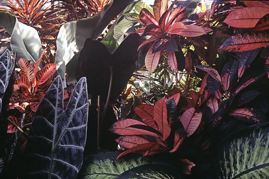 Botanical Garden Porrentruy 3 by Woscha
