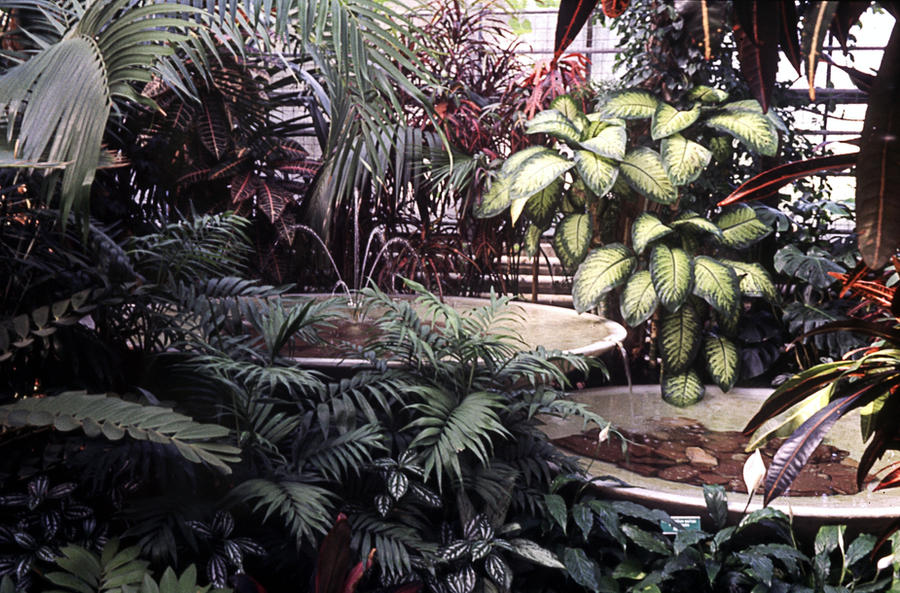Botanical Garden Porrentruy 4 by Woscha