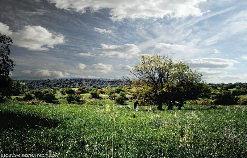 Ya`ar Yehudiyya  (Golan) by Woscha