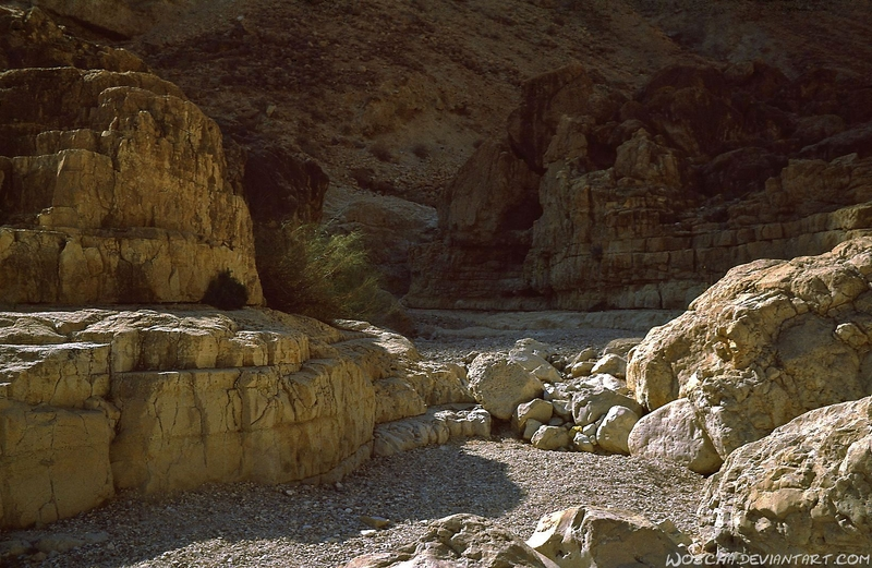 Nahal David - Dead Sea by Woscha