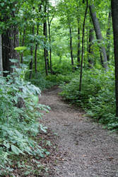 The Path, The Destination