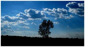 Abandoned Tree by BrailaCity
