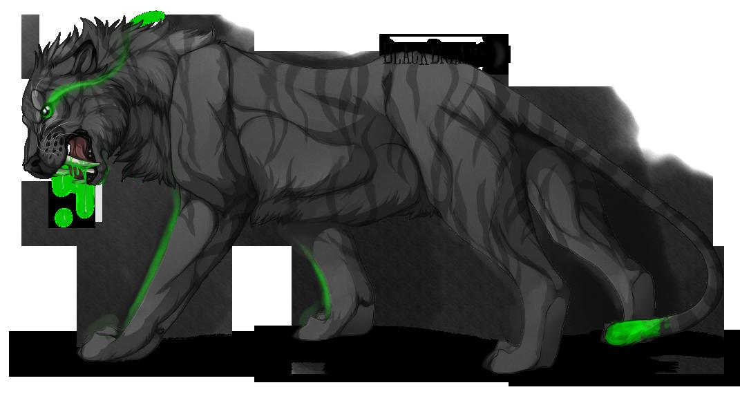 Tigr unknown male - 1 1