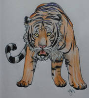 Tiger by twentynyne