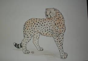 Cheetah- trade by twentynyne
