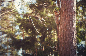 Squirrel climbing by kailay