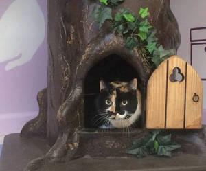 Wood Cat Trees - www.aHiddenHollow.com