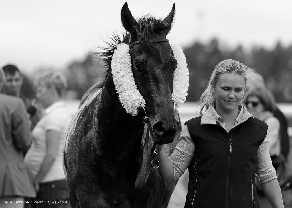 Horse Racing -Proud Winner by AndersStangl