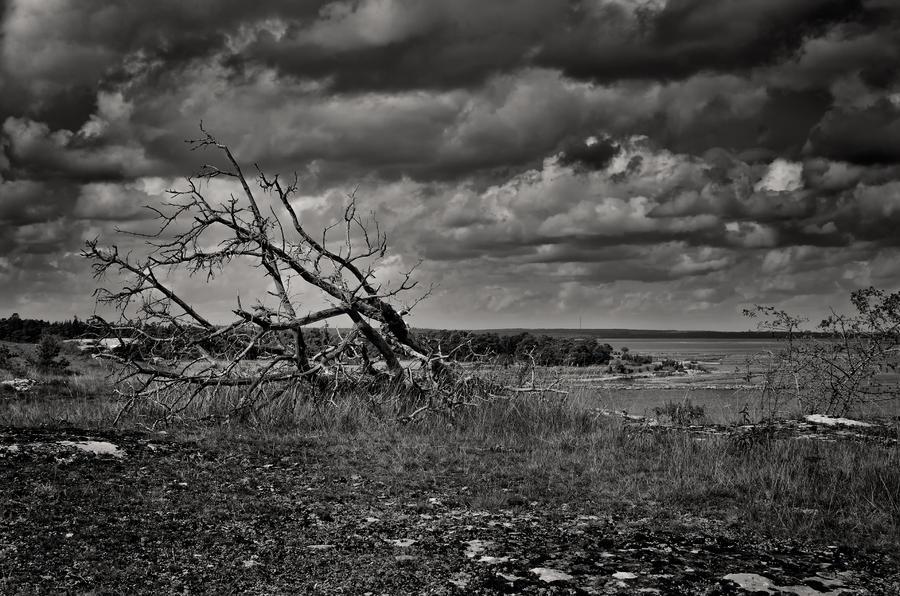 Gotland -Furilden by AndersStangl