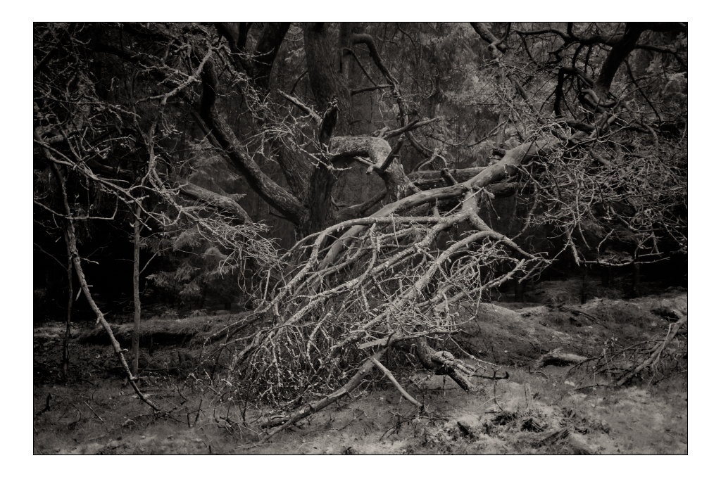 A Tree by AndersStangl