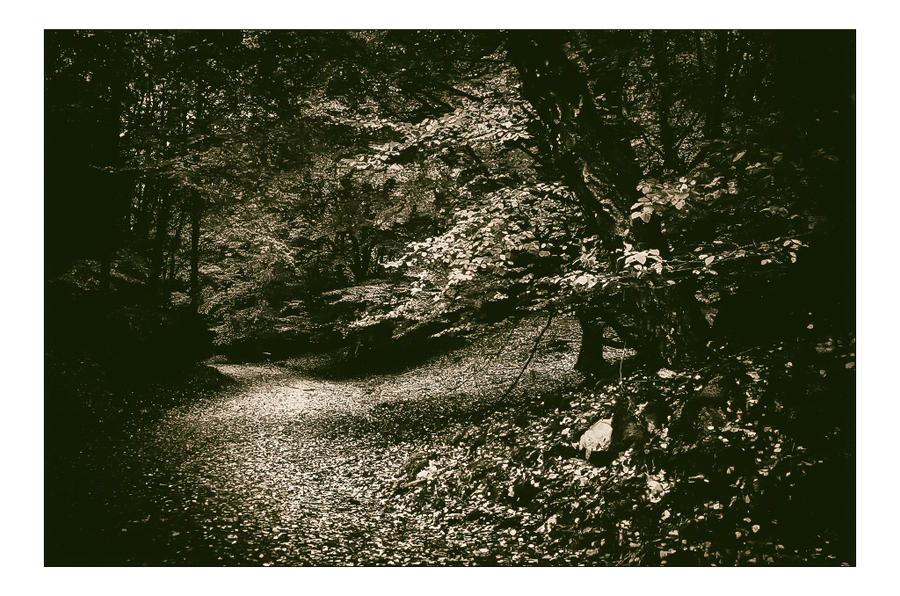 A Path by AndersStangl