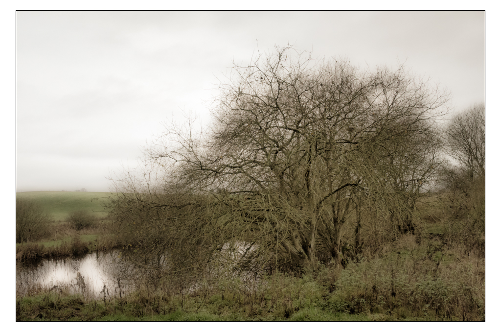 A Bush by AndersStangl