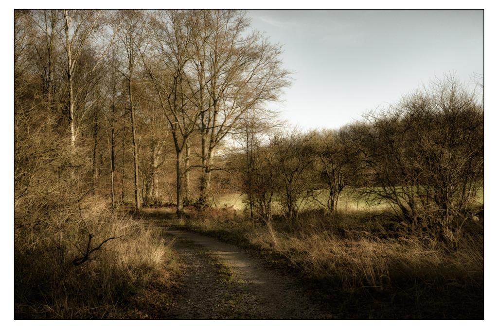 November Sun by AndersStangl