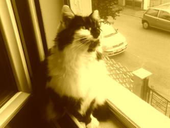 My Cat Joker