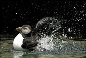 Splash by Svenimal