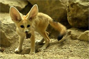 Veggie-Fox by Svenimal