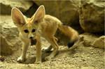 Veggie-Fox