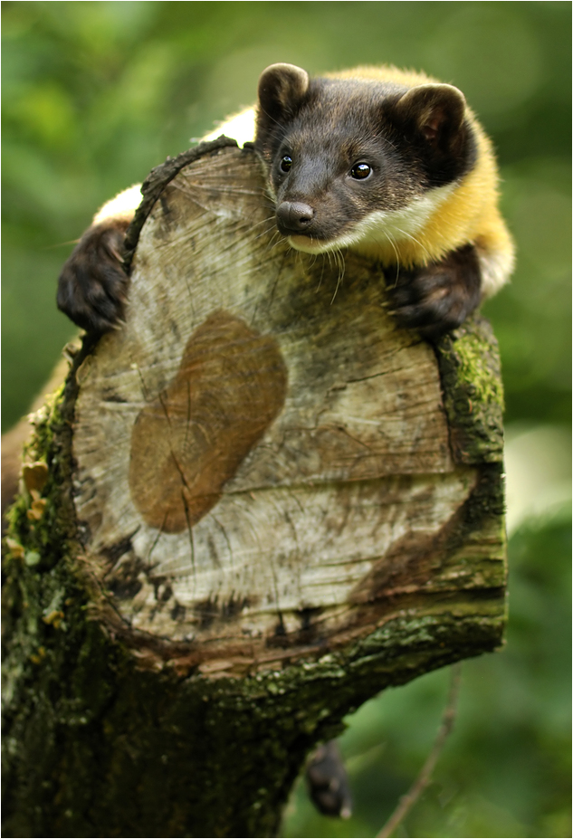 Treehugger by Svenimal