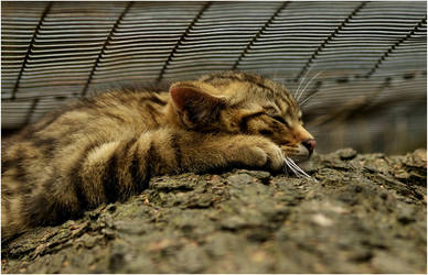 Deep sleep by Svenimal