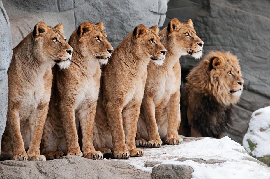 Family photo by Svenimal