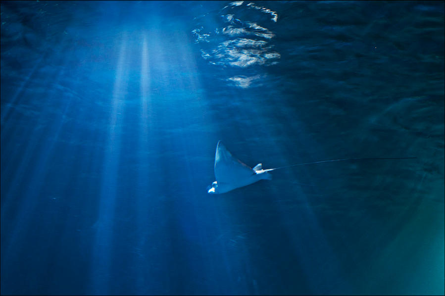 Into the blue by Svenimal