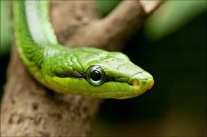 Green by Svenimal