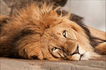 Lazy King