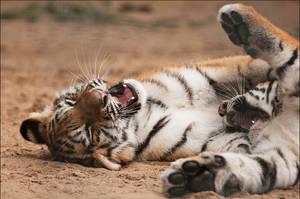 Lazy fighting by Svenimal