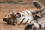 Lazy fighting
