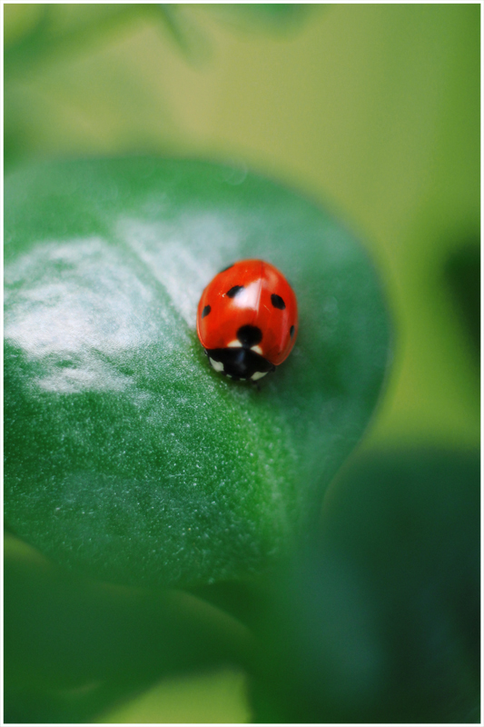 Little Ladybug by Moonlight-Traveller