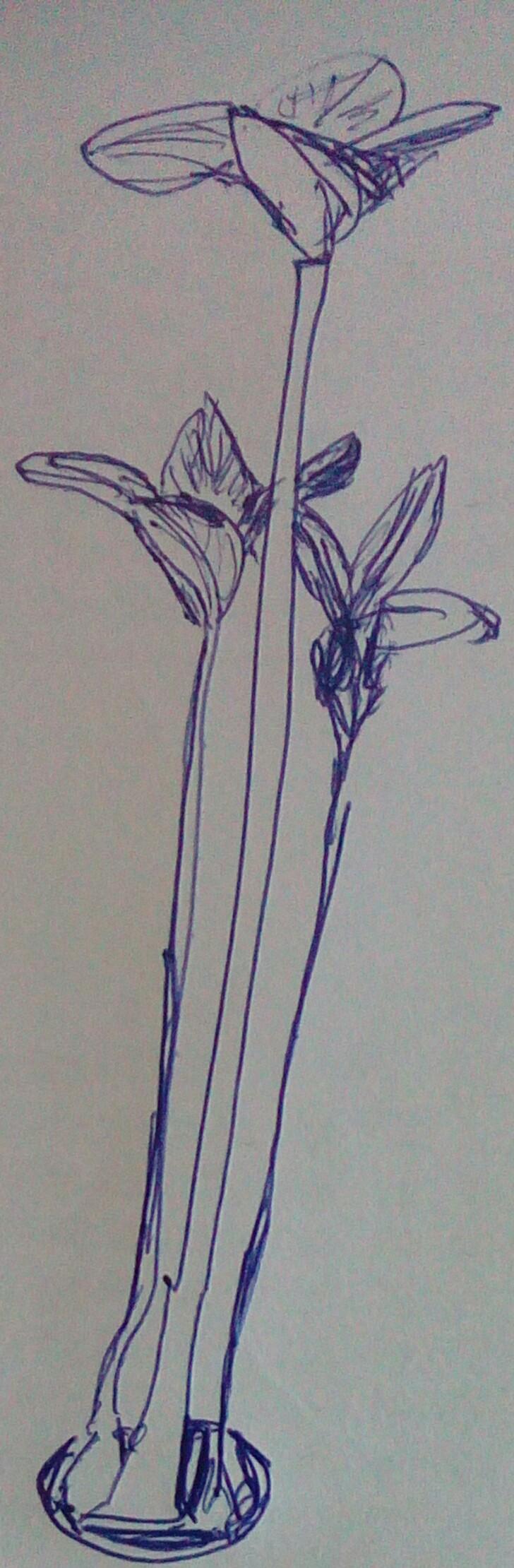 Drawing Plants by JimWolfdog