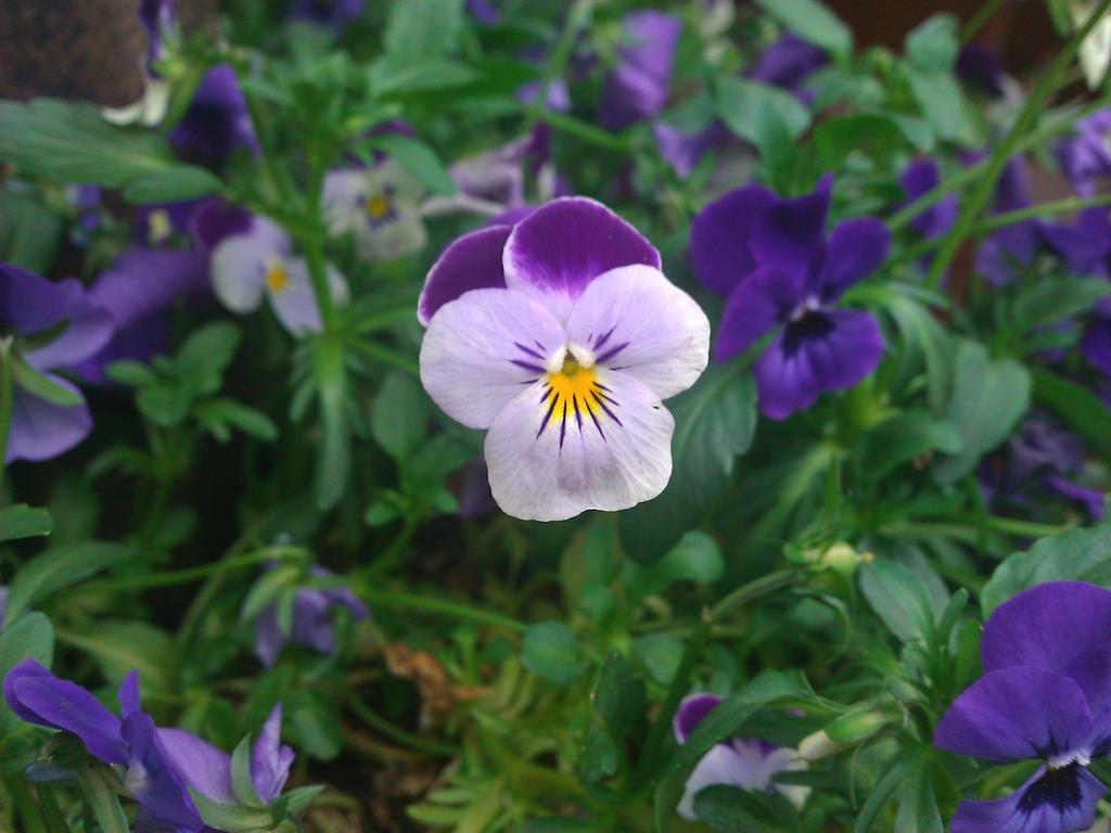 One little flower by demonlucy