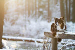 Winter Wonderland by TrablaMonRon
