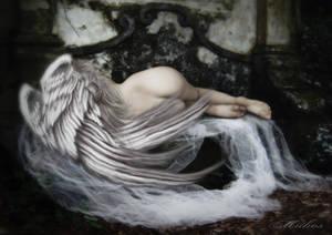 Angel Dormido.